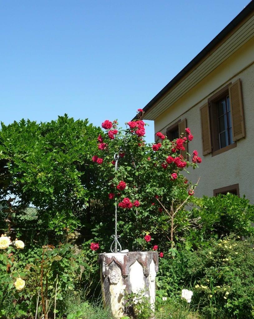 Rosenbrunnen