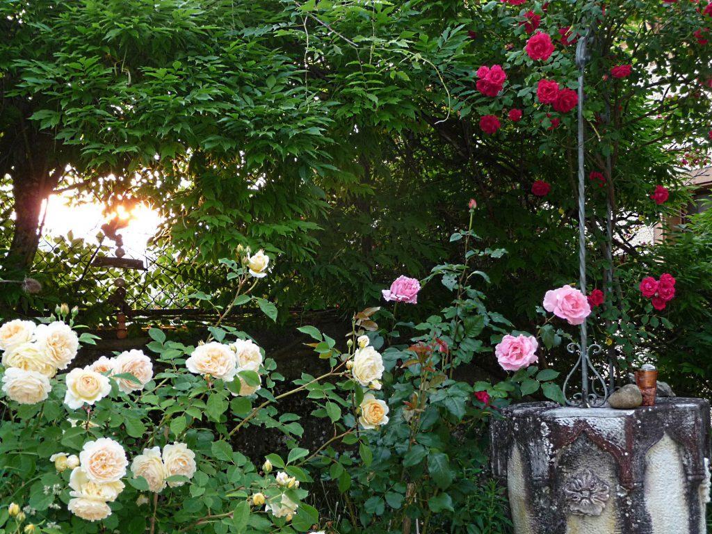 Rosen-am-Brunnen